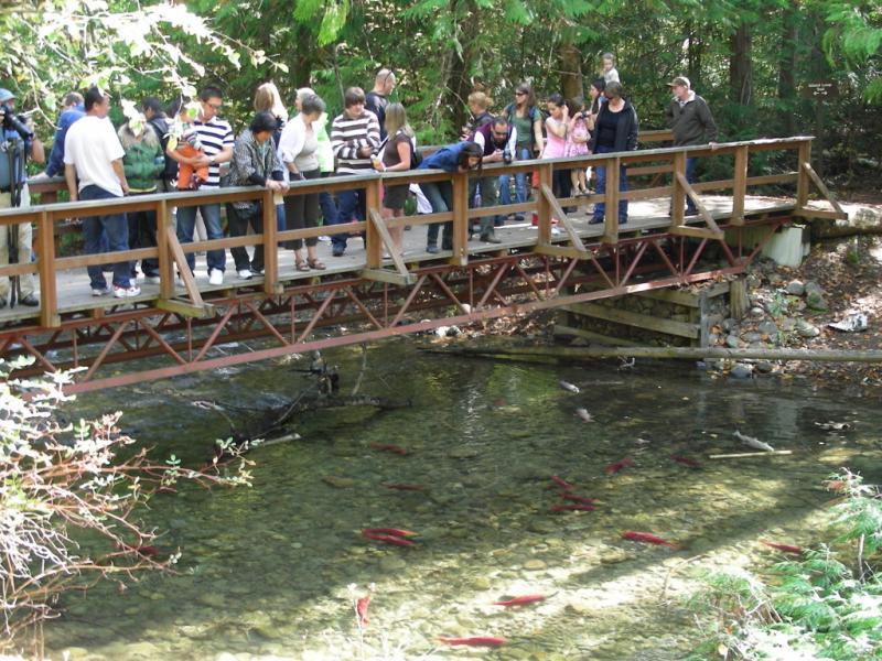 Salmon Run 2010